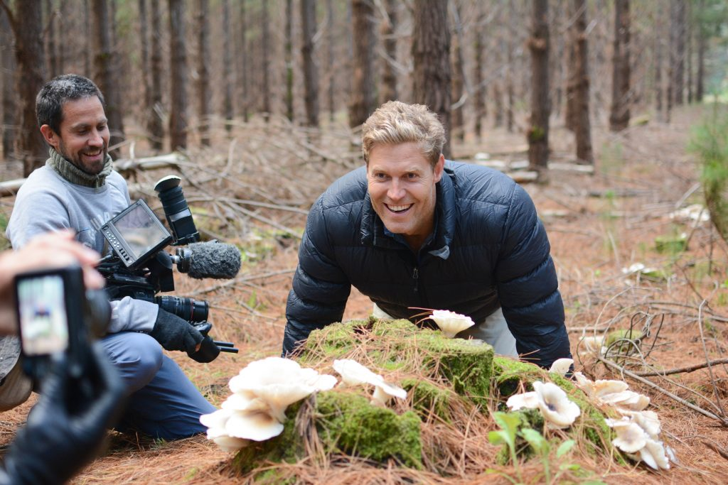 Ghost Mushroom Lane - visitor site now closed | ForestrySA